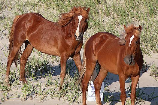 Wild Horses 112 by David Stasiak