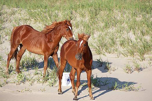 Wild Horses 113 by David Stasiak