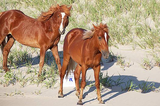 Wild Horses 114 by David Stasiak