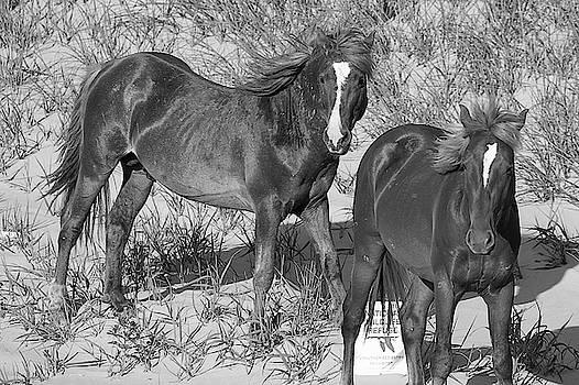 Wild Horses 115 by David Stasiak