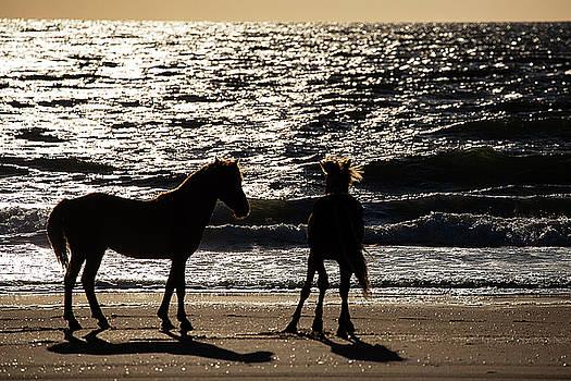 Wild Horses 31 by David Stasiak