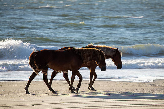 Wild Horses 32 by David Stasiak