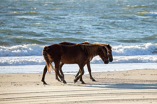 Wild Horses 33 by David Stasiak
