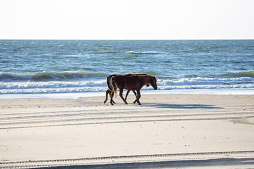 Wild Horses 34 by David Stasiak