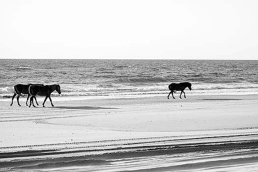 Wild Horses 35 by David Stasiak