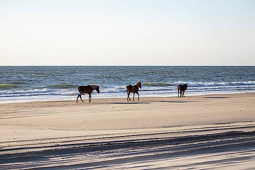 Wild Horses 36 by David Stasiak