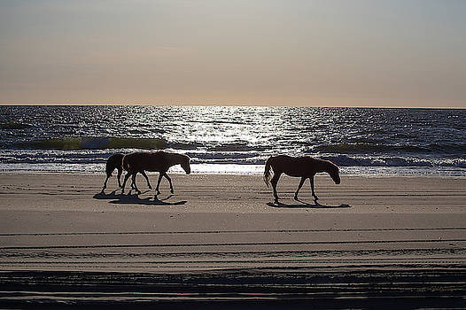 Wild Horses 37 by David Stasiak