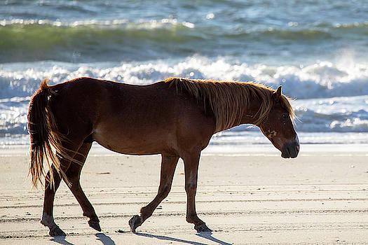 Wild Horses 38 by David Stasiak