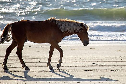 Wild Horses 39 by David Stasiak