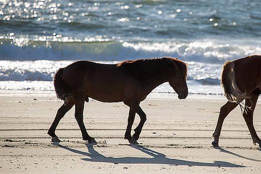 Wild Horses 40 by David Stasiak
