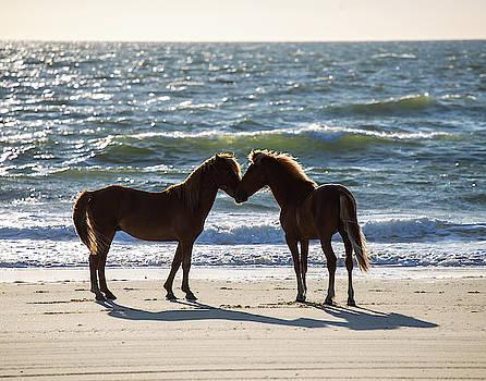 Wild Horses 41 by David Stasiak