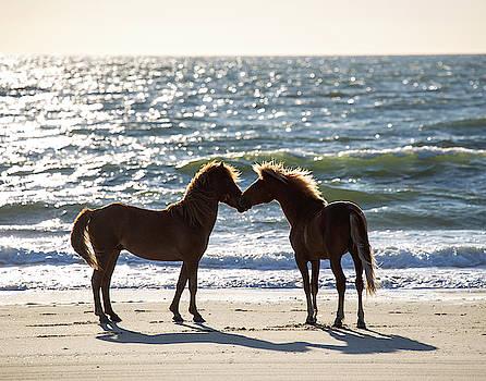 Wild Horses 42 by David Stasiak
