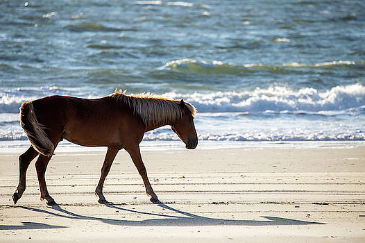 Wild Horses 44 by David Stasiak