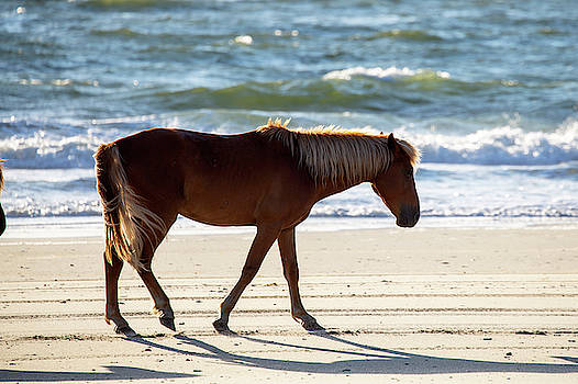 Wild Horses 45 by David Stasiak