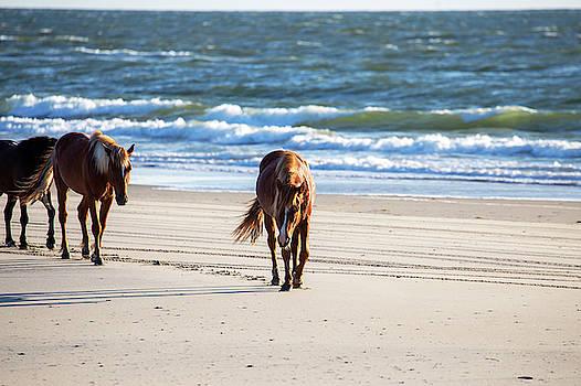 Wild Horses 47 by David Stasiak