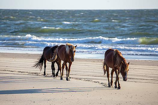 Wild Horses 48 by David Stasiak