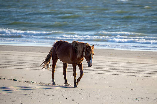 Wild Horses 49 by David Stasiak