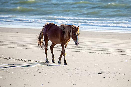 Wild Horses 50 by David Stasiak