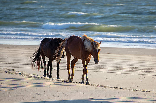 Wild Horses 51 by David Stasiak