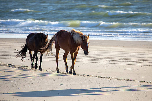 Wild Horses 52 by David Stasiak