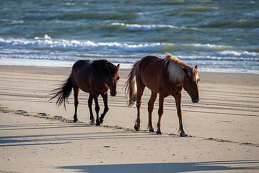 Wild Horses 53 by David Stasiak