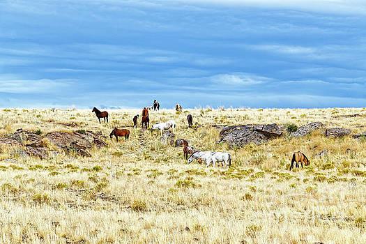 wild horses adults colts prairie ridge Oregon by Robert C Paulson Jr