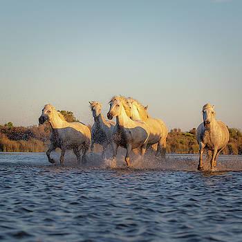 Francesco Riccardo Iacomino - Wild Horses