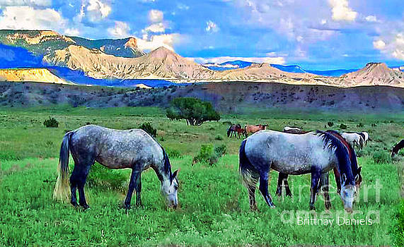 Wild Horses in Dissapointment Valley by Annie Gibbons