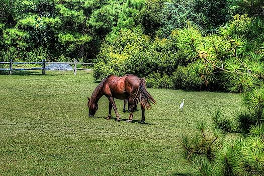 Wild Horses of Corolla 5 by Brian Cole