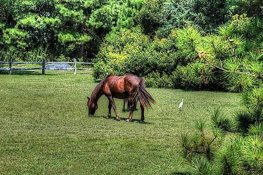 Brian Cole - Wild Horses of Corolla 5