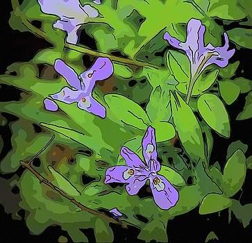 Wild Mountain Iris 2 by Cathy Lindsey