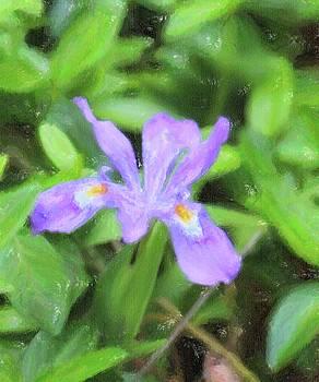 Wild Mountain Iris 4 by Cathy Lindsey
