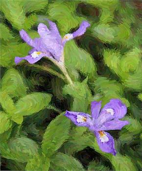 Wild Mountain Iris 6 by Cathy Lindsey