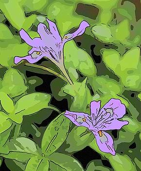 Wild Mountain Iris 7 by Cathy Lindsey