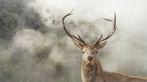 Wild Nature - Stag by Andrea Kollo