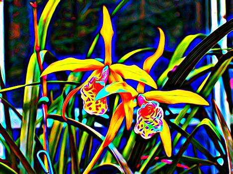 Wild Orchid by Mark J Dunn