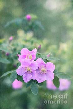 Wild roses in the forest by Priska Wettstein