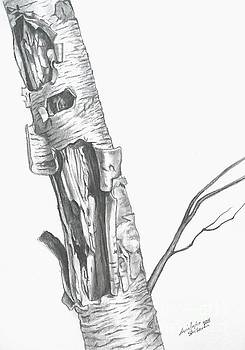 Wild Single Birch Tree in pencil by Christopher Shellhammer