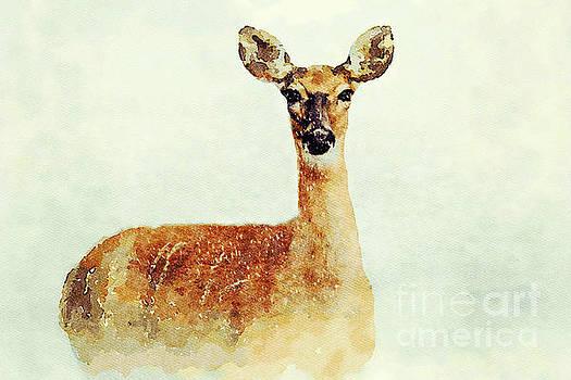 Wild Snow Deer by Leon Woods