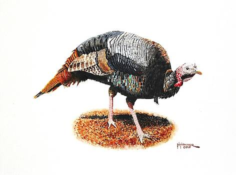 Wild Turkey Tom by Nelson Hammer