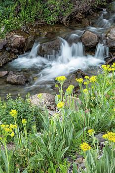 Wildflower Overlook by Denise Bush
