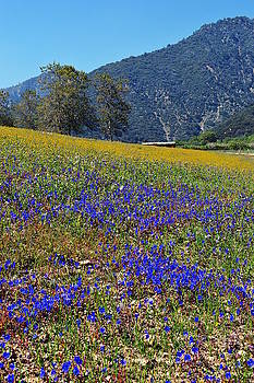 Wildflowers At Oak Glen Preserve by Glenn McCarthy Art and Photography