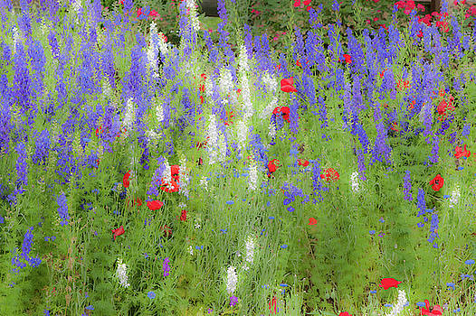Wildflowers in the Rain by Mark Duehmig