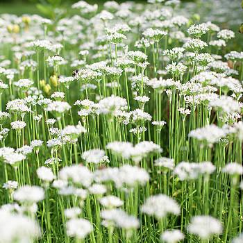 Wildflowers by John Daly