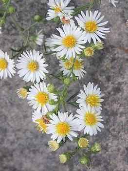 Wildflowers by Mandy Byrd