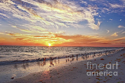 Willets on Florida Beach at Sunset by Catherine Sherman