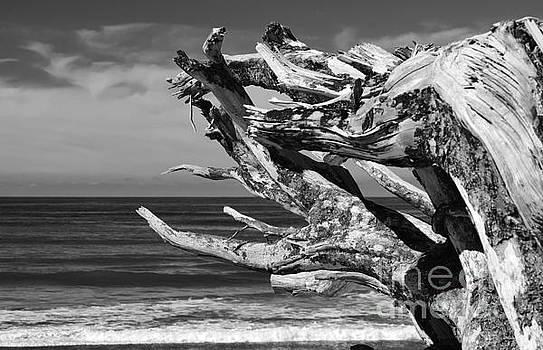 Wind Drift by Jeni Gray
