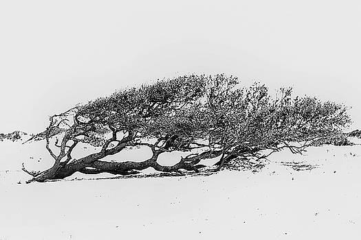 Windswept by Bob Decker