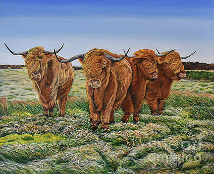 Windswept Highland Cattle  by Marilyn McNish