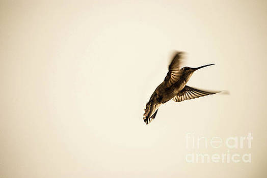 Wing study series B by Wendy Girard